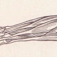 מתוך הספר The Human Body and Health Revised מאת אלווין דיוויס, 1908.