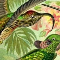 """הציפורים של """"אלכסון"""", מתוך הגיליון הראשון"""