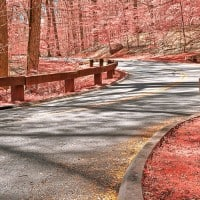 דרך ביער ורוד