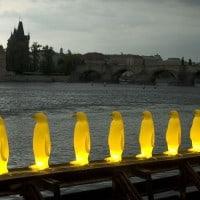 פינגווינים מוארים על גשר בפראג