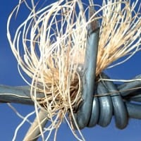 גדר תיל, צמח יבש