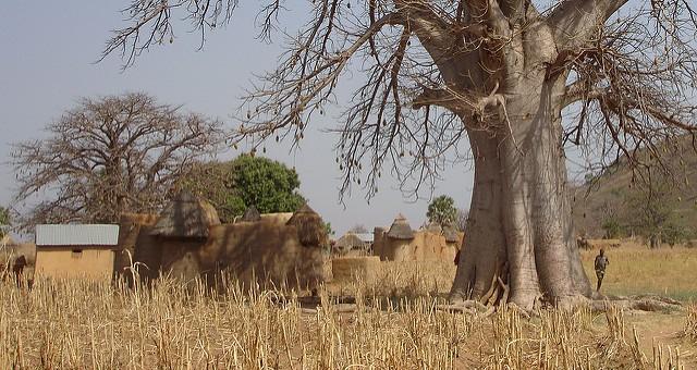 באובב, דהומיי, אפריקה