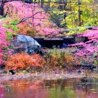 אגם ורוד, צמחייה ורודה ליד מים