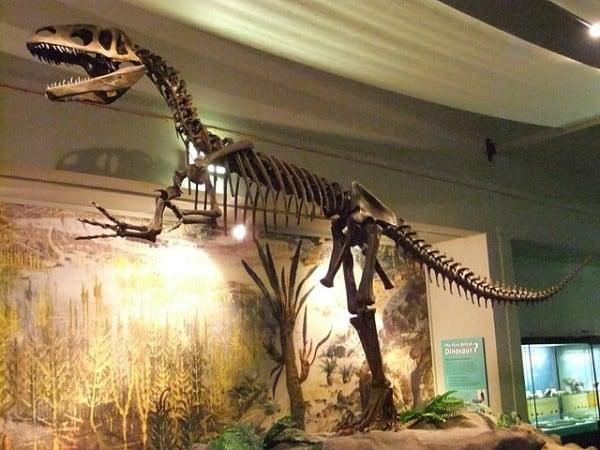 מגלוזאורוס במוזיאון ליברפול.