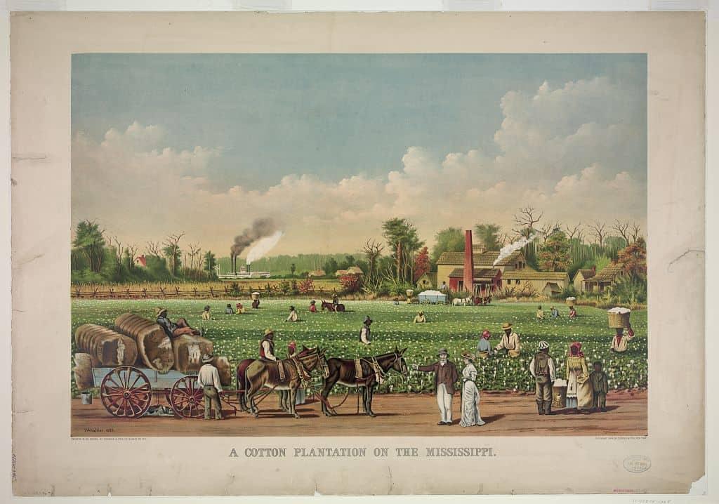 שדה כותנה במיסיסיפי, ליטוגרפיה, 1884. ארכיון ספריית הקונגרס