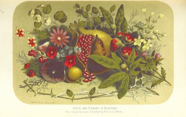 פירות וצמחים