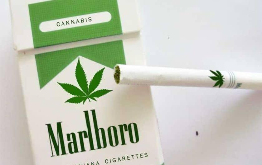 המחשה של ההבדל בתפיסה החברתית-כלכלית בין צמח הטבק לצמח הקנביס. פוטומונז׳: אונו