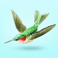 לוגו אלכסון