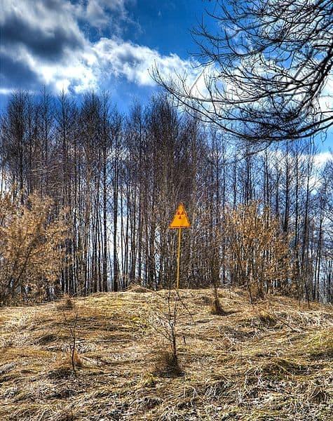 """אסון צ'רנוביל התרחש בזמן משמרת הלילה. בצילום """"היער האדום"""", כ-4 קילומטרים של יערות מסביב לעיירה שנפגעו מקרינה. צילום: טים סוס"""