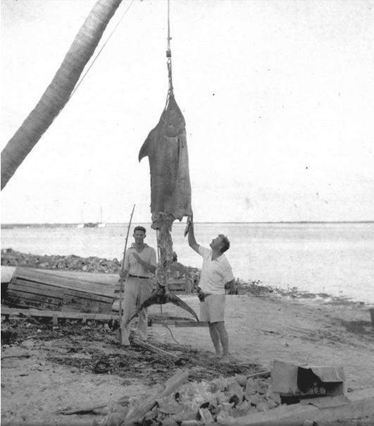 המינגוויי בחברת הנרי ״מייק״ סטראטר ודג מרילין. איי הבהאמס 1936. צילום באדיבות פן הוצאה לאור