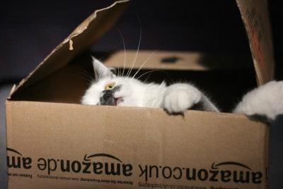 חתול בקופסא