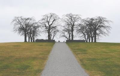 עצים גלמודים