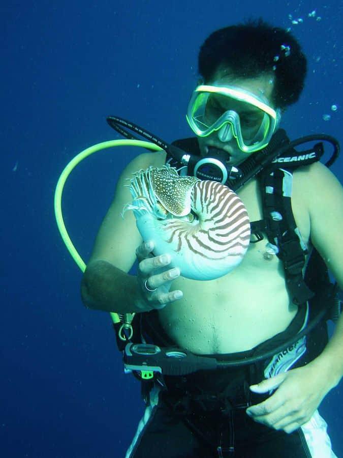 צוללן מחזיק תמנון בשם Palau nautilus. צילום: פרוף ברגר