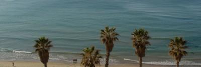 עצי דקל על החוף