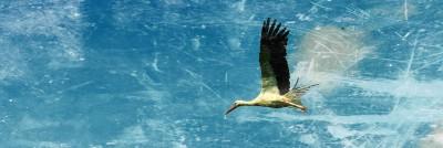 ציפור בתעופה
