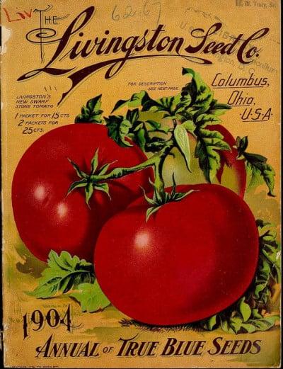 זרעי עגבניות מזן משובח