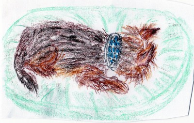 ציור של כלב, בהשפעת Lorazepam