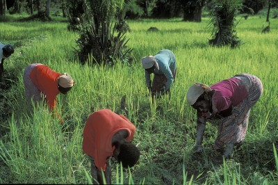 נשים עובדות בשדה