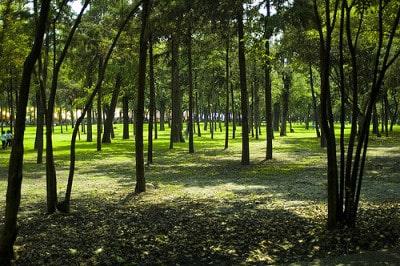 יער צ'פולטפק, במקסיקו סיטי.
