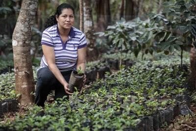 מטעי קפה אל סלבדור, קואופרטיב