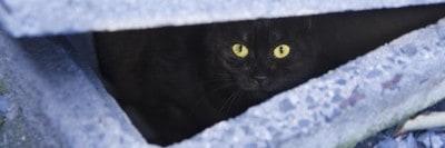 חתול בין בלוקים