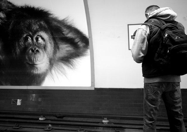 אבולוציה, אדם מול קוף