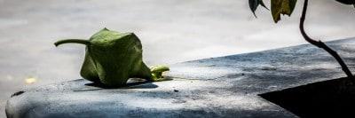 פרי ירוק בשמש, ג'אווה