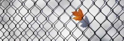 """""""גדר רשת מתכתית עם עלה""""."""
