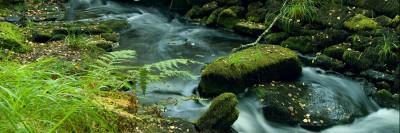 נהר זורם בין אבנים וצמחייה