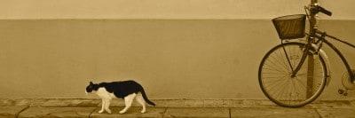 חתול הולך על המדרכה ואופניים קשורות