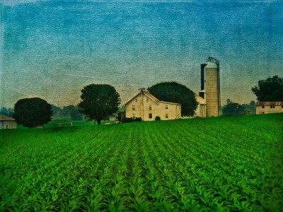 חווה של בני אמיש