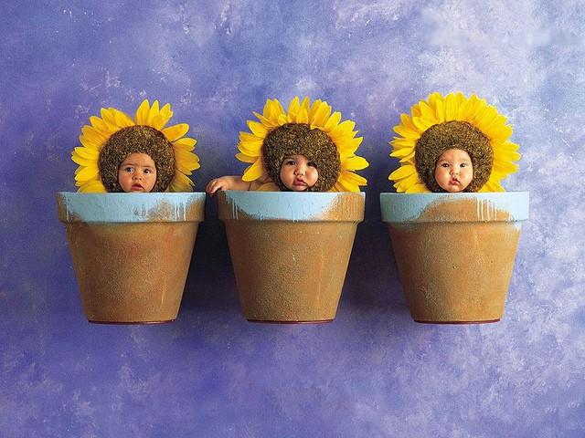 שלושה עציצים עם תינוק בתור פרח