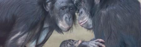 משפחת קופי בונובו