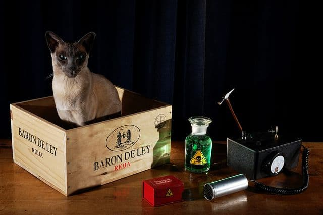 חתול ואביזרים להדגמה בפיזיקה