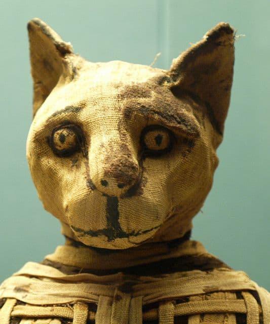 חתול חנוט, מומיה של חתול
