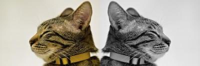 חתולים, מצרים העתיקה