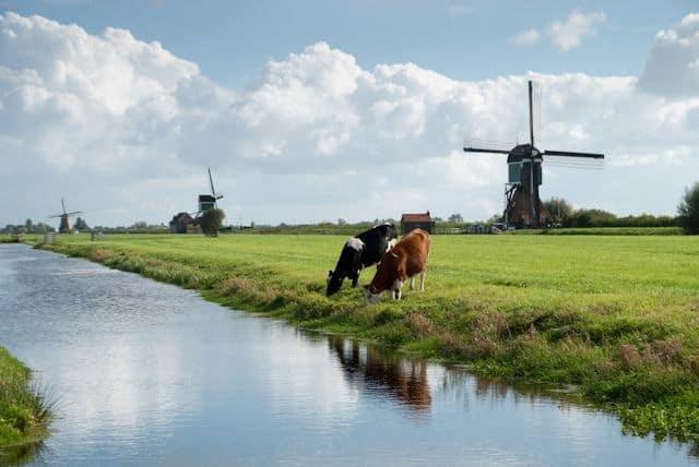 הולנד, פרות, טחנות רוח, תעלה