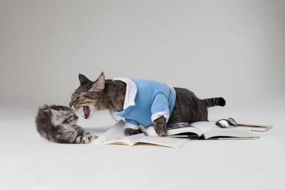 חתול מאיים, חתלתול מפוחד