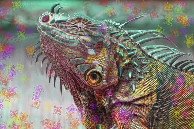 איגואנה, LSD, הזיה