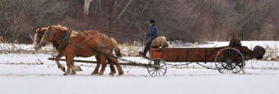 נער, אמיש, עגלה וסוסים, שדה