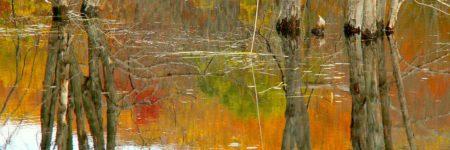 עצים במים, השתקפות
