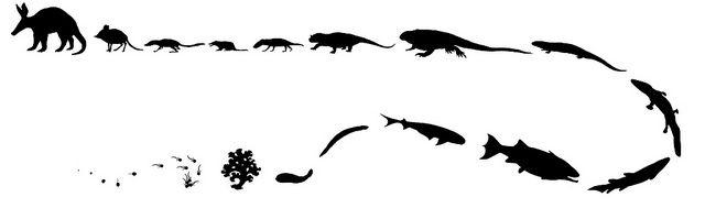 שנבוב, אבולוציה, Aardvark