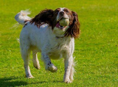 כלב מביא כדור