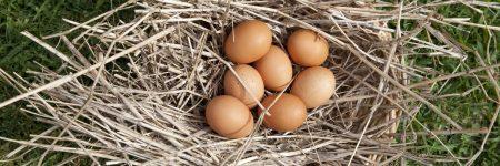 ביצים, סל