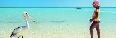 ילדה, חוף הים, פליקן