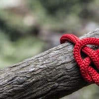 לב, חוט אדום, עץ