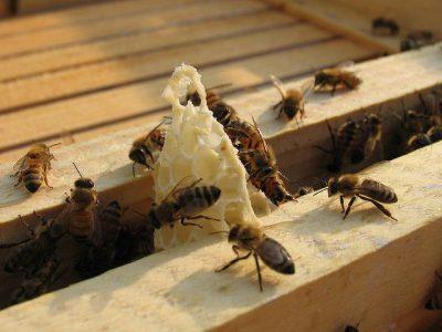 דבורים, חלת דבש