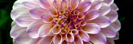 רוחניות, פרח