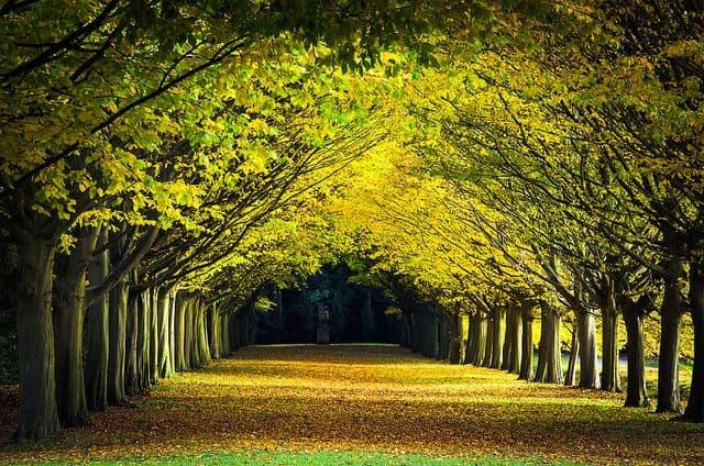 עצים, גנים, קיימברידג'