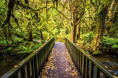 דרך, יער, גשר